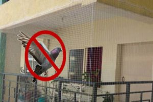 Anti Pigeon Nets in Bangalore