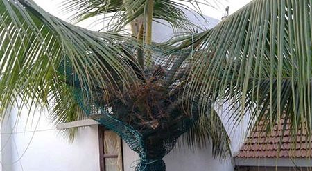 coconut protection nets in bangalore