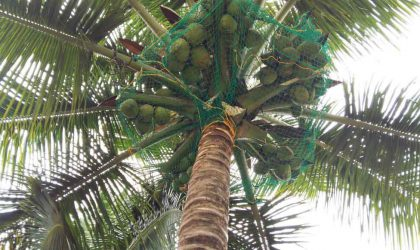 Coconut Tree Nets in Bangalore
