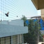pigeon nets in bangalore